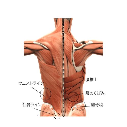 腰の解剖、バレエの腰痛の治療、バレエ治療院あんじゅ