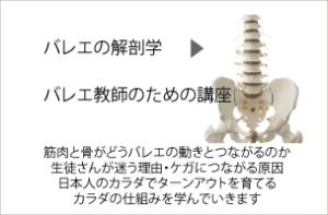 バレエの解剖学講座