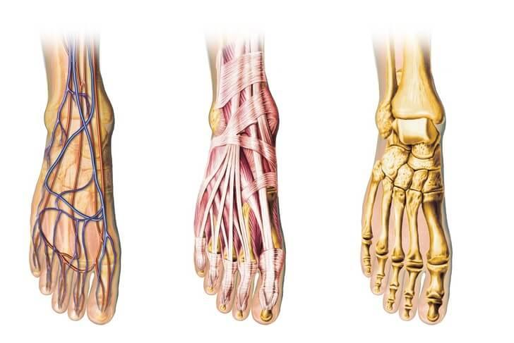 母趾痛、外反母趾、長母趾屈筋腱炎、バレエ・ダンスのケガ、バレエ治療院あんじゅ