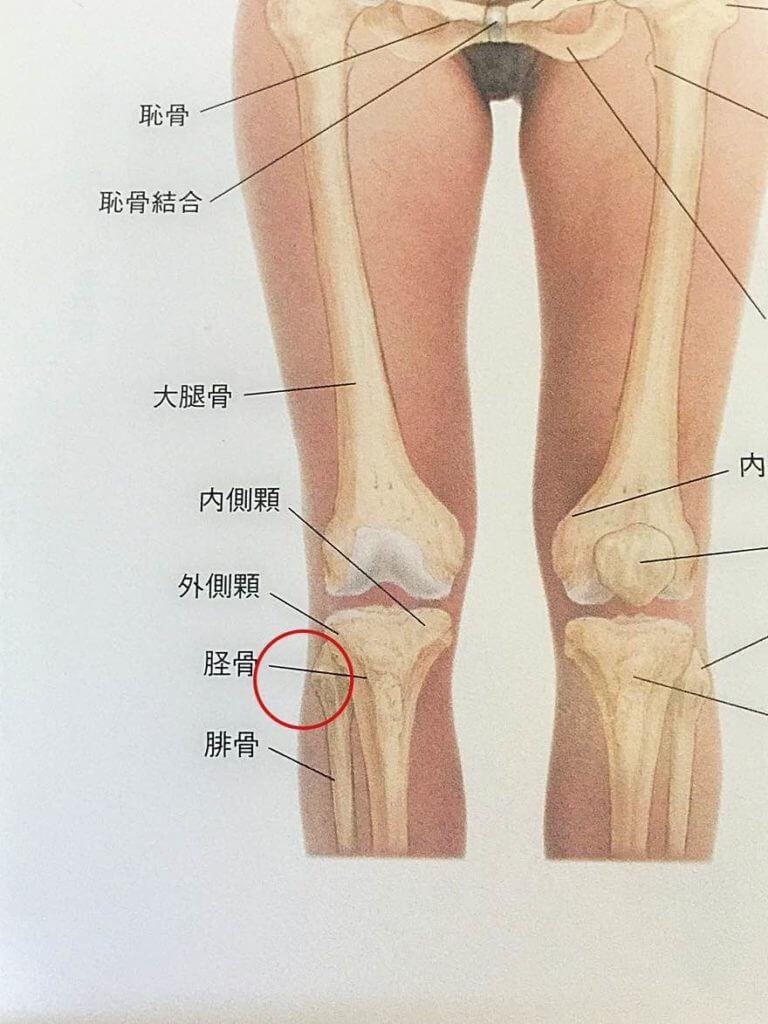 腓骨、後ろ体重を避ける、バレエの立ち方、バレエ治療院あんじゅ