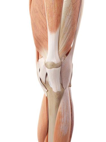 膝周りの筋肉、構造、バレエ治療院あんじゅ