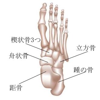 甲を育てるために大切な足部の骨、バレエ治療院あんじゅ