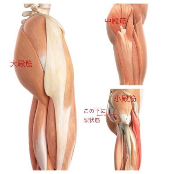 バレエの解剖学、骨盤の筋肉、バレエ治療院あんじゅ