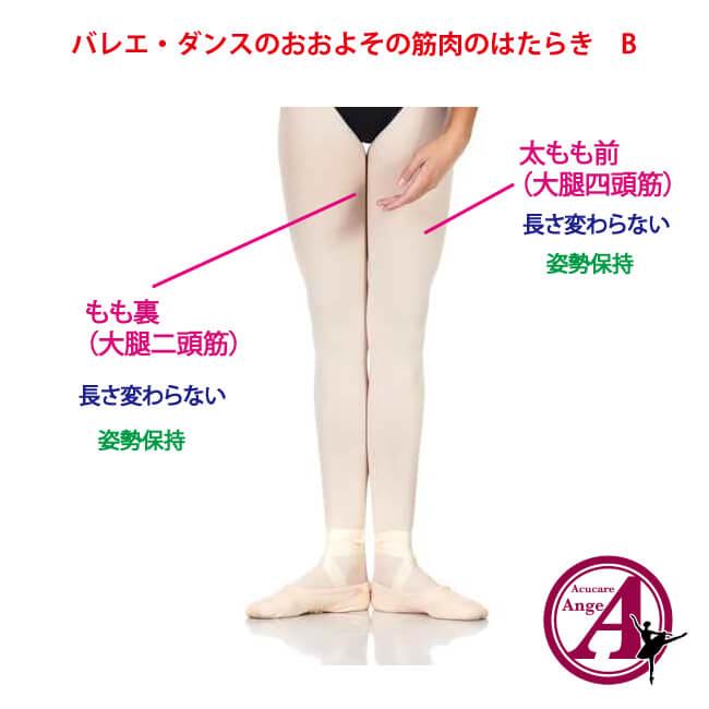 バレエ・ダンスの筋肉の働き、姿勢保持筋、ターンアウトの秘訣、バレエ治療院あんじゅ